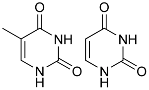Science Caturday  I U2019m A Cil  No  Uracil
