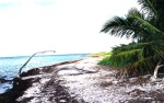 Beach_in_key_west