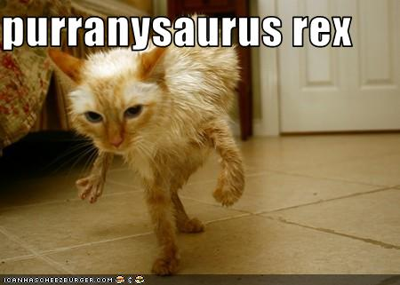 funny-pictures-cat-is-dinosaur