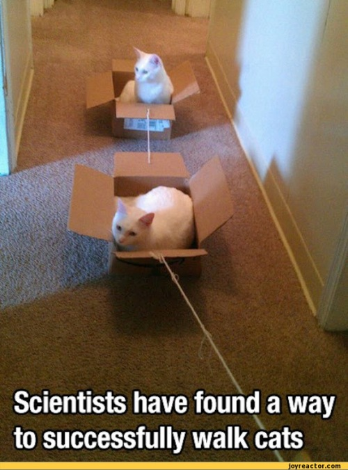 cats-science-box-581257