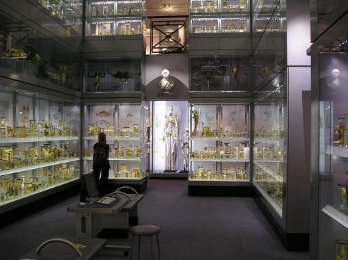 Hunterian_Collection