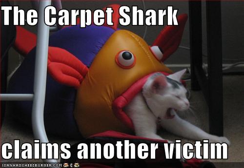 catshark