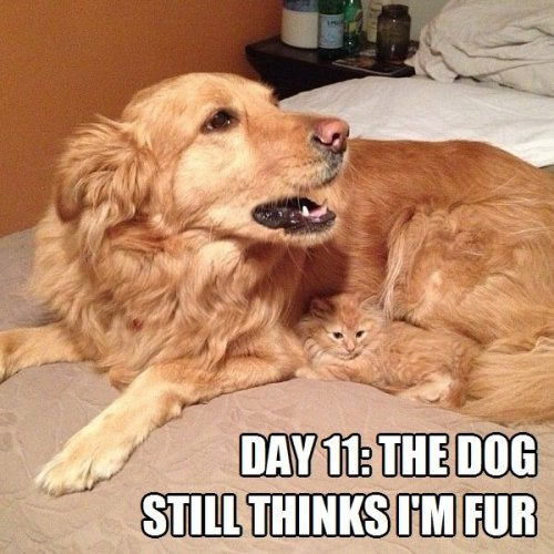 Day-11-The-dog-still-thinks-Im-fur