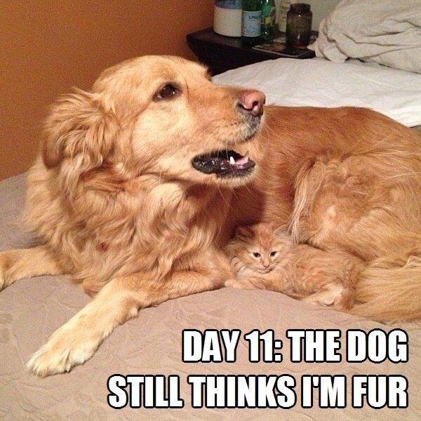 Day-11-The-dog-still-thinks-Im-fur