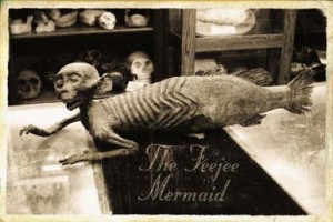 feejee_mermaid3-300x200