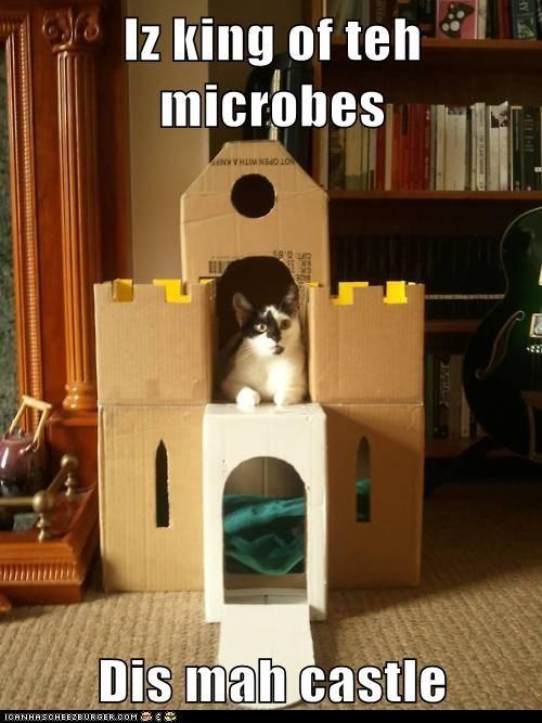 microbeking