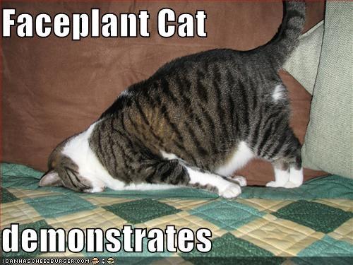 faceplantcat