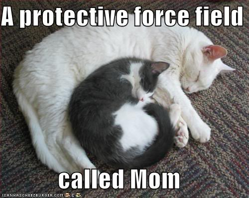 lolcatforcefield