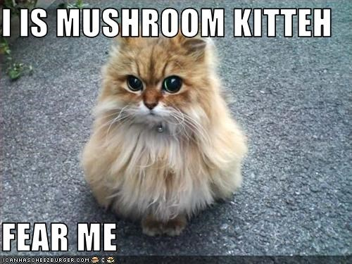 mushroomcat