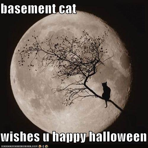 basement-cat-wishes-you-a-happy-halloween