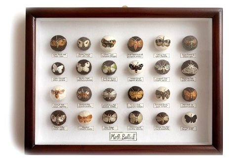 Claire Moynihan, Moth Balls II, Mixed Media, 2013