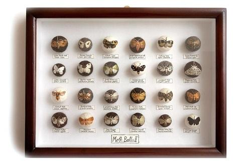 Claire Moynihan, Moth Balls II, Mixed Media, 2013