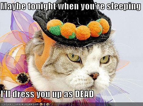 funny-pictures-cat-will-kill-you-for-dressing-him-up