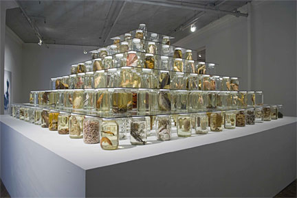 Brandon Ballengee Collapse, 2012 mixed-media installation