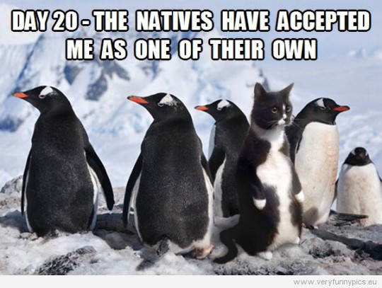 funny-picture-a-cat-amongst-penguins-day-20-the-natives-hav-accepted-me-as-one-of-their-own-540x407