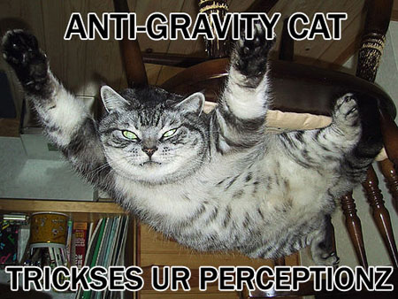 antigravity cat