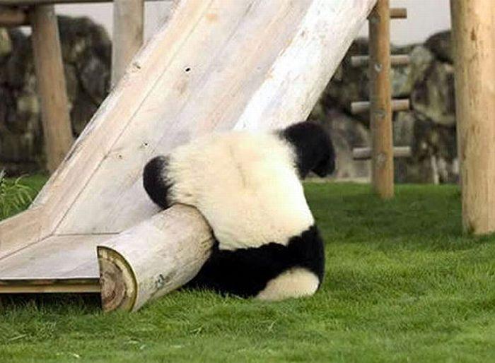 panda-slide