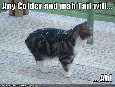lol-cat-cold