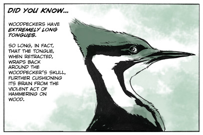 """Did You Know...Woodpecker Edition"" - The Abominable Charles Christopher by Karl Kerschl (All Rights Reserved - Used With Permission)"