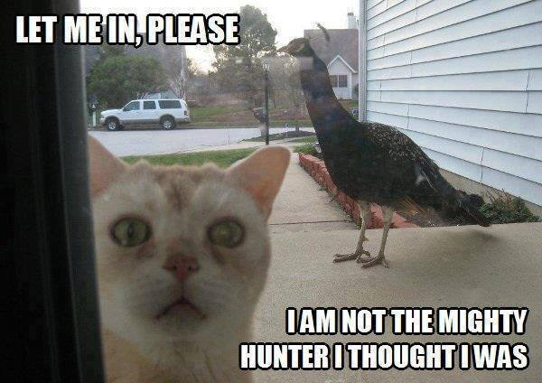 i am not the mighty hunter i thought i was