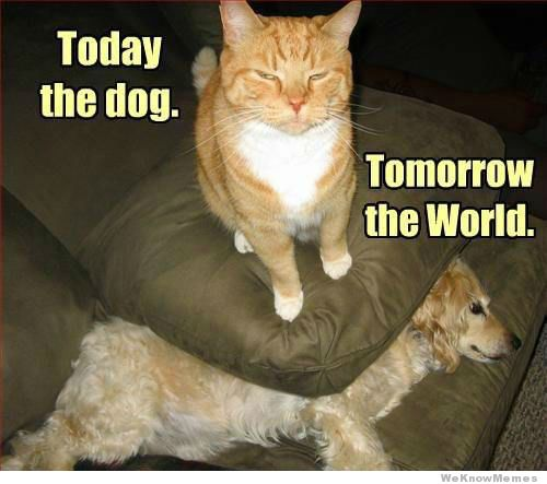 today-the-dog-tomorrow-the-world